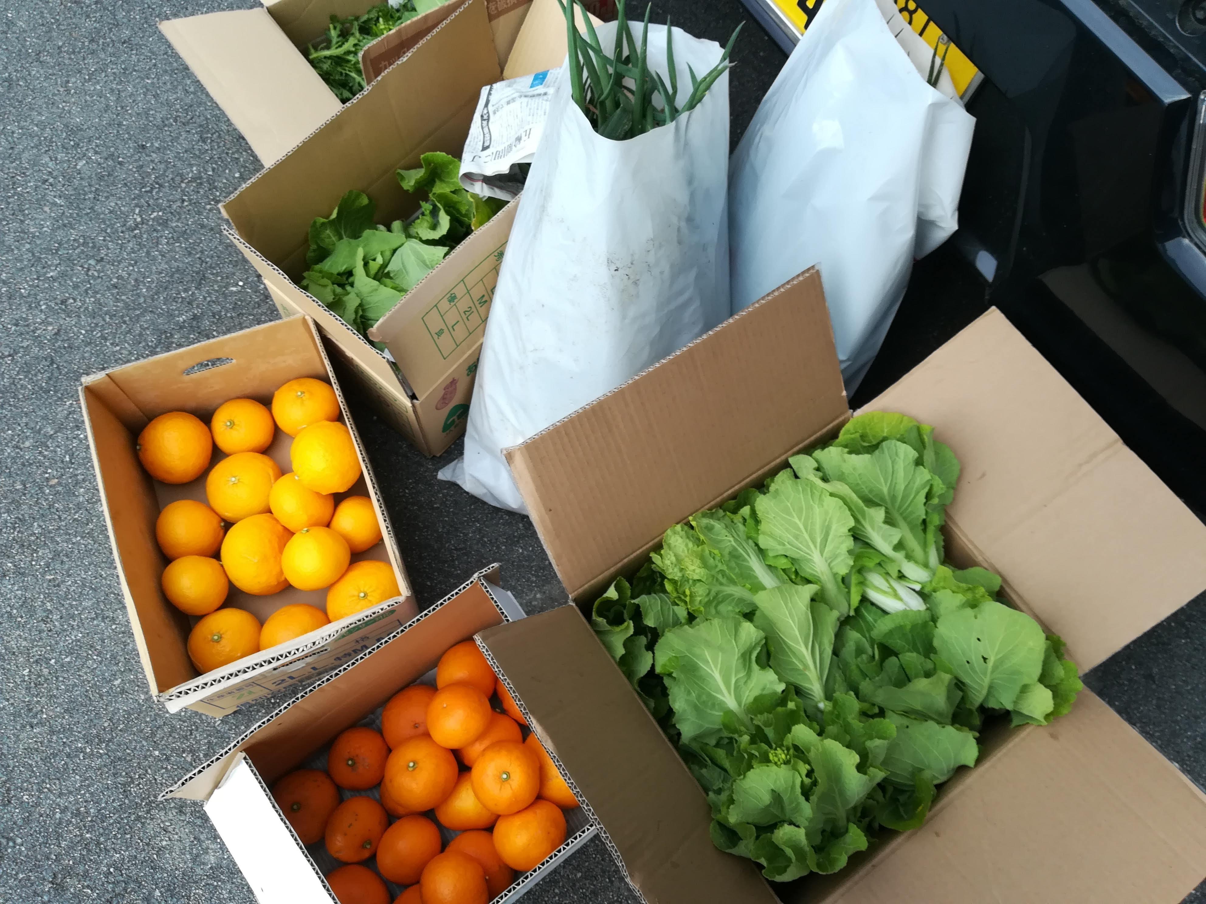 農家さんの収穫野菜と果物