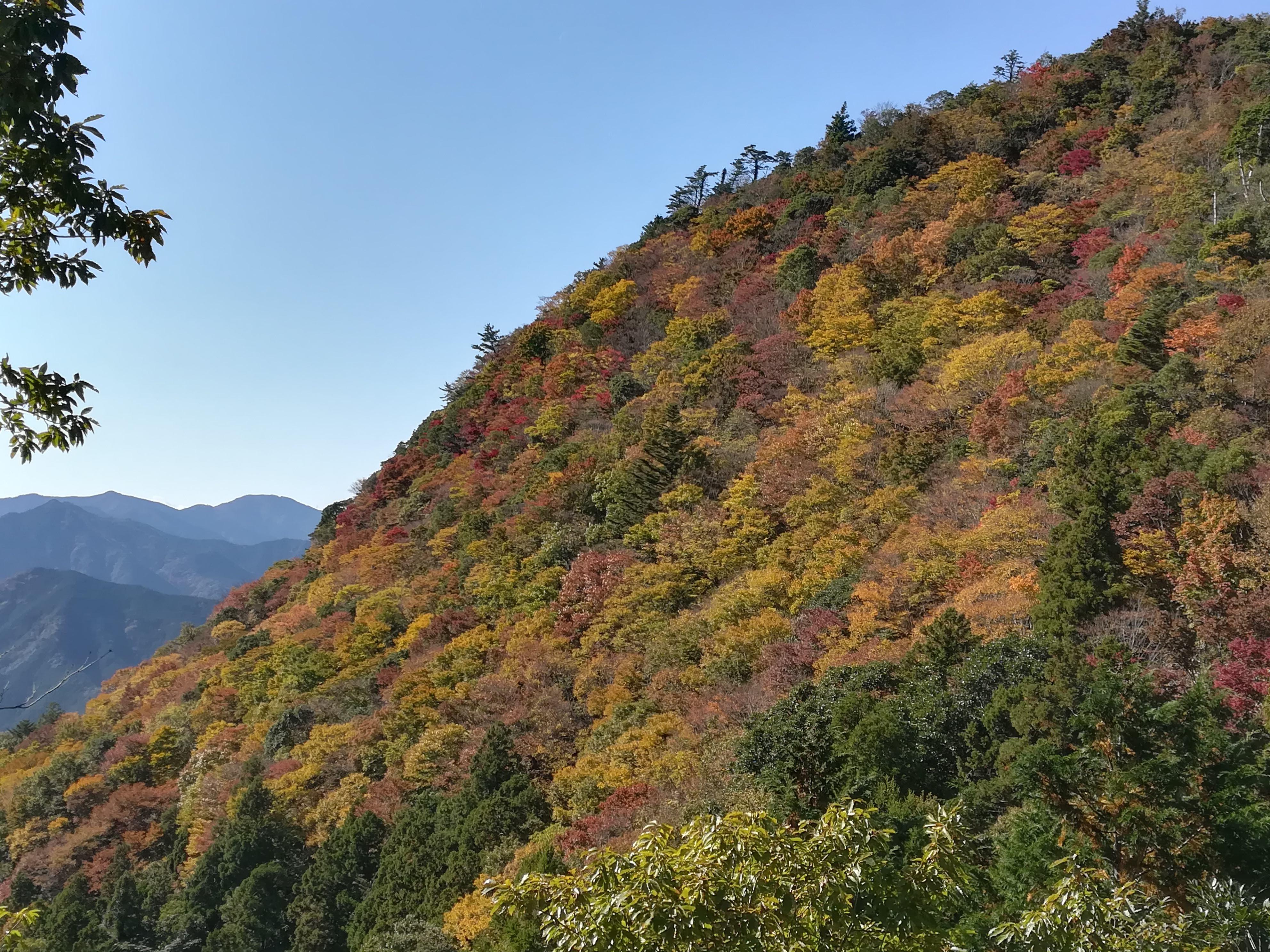 網掛山の紅葉