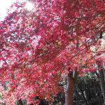 網掛山の紅葉01