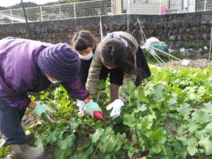季節の野菜収穫体験