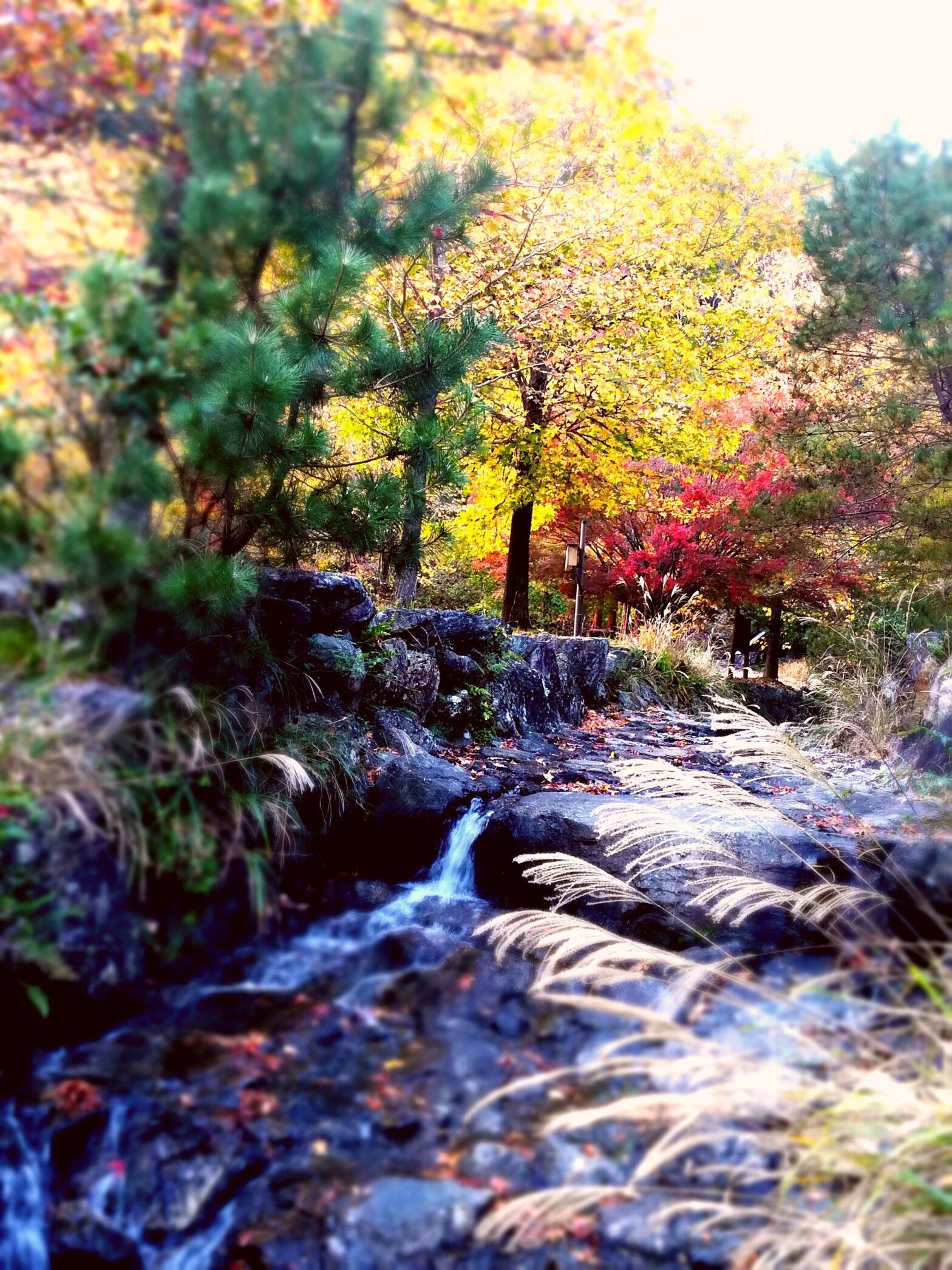 笠木渓谷の紅葉